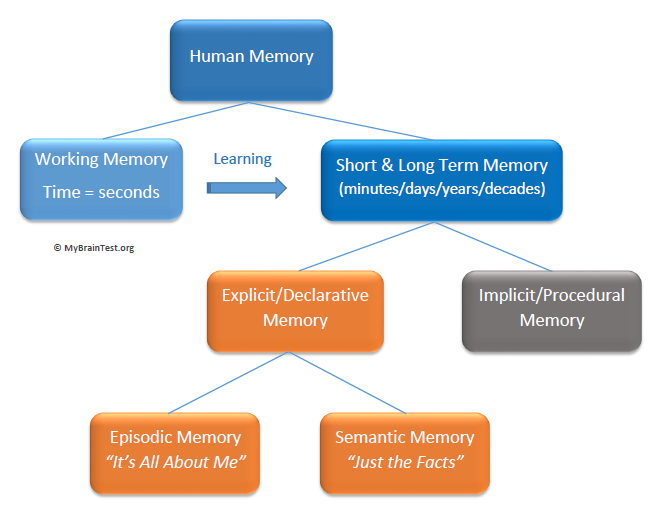 the human memory model Much of what scientists know about human memory comes from studies involving relatively simple acts of recollection — remembering lists of words or associations between names and faces however, they know very little about the brain networks that support memories for complex events, like when we.