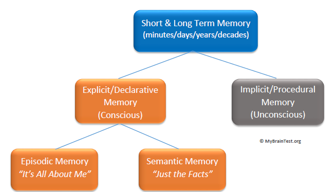 Short Term Memory And Long Term Memory Memoryhealthcheck